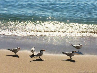 2751 S Ocean Dr #207N photo042
